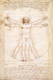 Human Proportions - Vitruvius Man Posters by  Leonardo da Vinci