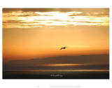 To the Gulls Way Prints by Graham Rhodes