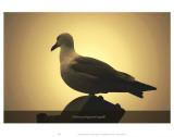 I Dream of Wayward Seagulls Art by Graham Rhodes
