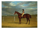 The Racehorse 'The Colonel' with William Scott Up Giclee Print by John Frederick Herring Snr