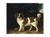 Fanny, the Favourite Spaniel of Mrs. Musters, Standing in a Wooded Landscape, 1777 Giclee Print by George Stubbs