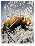 Cat-Bear of the Himalayas, from 'Nature's Kingdom' Giclee Print by Susan Cartwright