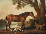 A Bay Hunter, a Springer Spaniel and a Sussex Spaniel, 1782 Premium Giclee Print by George Stubbs