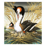 Great Crested Grebe, Illustration from &#39;Once Upon a Time&#39; Giclee Print by Pratt 