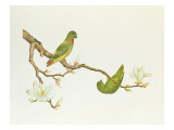 Blue-Crowned Parakeet, Hanging on a Magnolia Branch, Ch&#39;Ien-Lung Period Giclee Print by Chinese School 