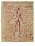 Anatomy of the Human Body, from 'Tractatus De Pestilencia' Giclee Print by M. Albik