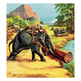 Elephant. Illustration from Elephant Bill by Liuet. Col. J. H. Williams Giclee Print by  English School