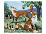 Our Island's Hunters, from 'Nature's Kingdom' Giclee Print by R. B. Davis