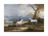 Lord Macdonald's Mares on the Grounds of Thorpe Hall, Rudston, Yorkshire, 1836 Premium Giclee Print by John E. Ferneley