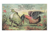 A Fowl Blow', Advertisement for Thos. Hersom and Co's Best Soap, C.1880 Giclee Print by  American School