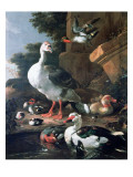 Waterfowl in a Classical Landscape, 17th Century Giclee Print by Melchior de Hondecoeter