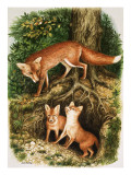 The Fox Family, Illustration from 'Once Upon a Time', 1971 Giclee Print by John Chalkley
