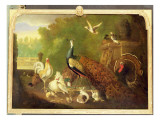 A Peacock, Turkey and Other Birds in an Ornamental Garden Lámina giclée por Marmaduke Cradock