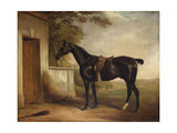 Portrait of Buckle, First Lord Chesham&#39;s Hunter, 1836 Giclee Print by John E. Ferneley