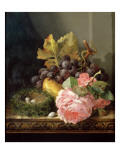 Still Life, Roses, Fruit and Bird's Nest Giclee Print by Edward Ladell