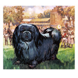 Black Knight. the Pekinese Dog Owned by Artist Sir Alfred Munnings. Giclee Print by  McConnell