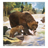 Yogi Bear's Real-Life Relatives, 1964 Giclee Print by G. W Backhouse