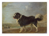 A Newfoundland Dog on a Seashore Giclee Print by Edmund Bristow