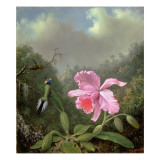 Still Life with an Orchid and a Pair of Hummingbirds, C.1890S Gicleetryck av Martin Johnson Heade