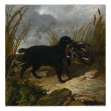 An Irish Water Spaniel Retrieving a Mallard Drake, 1849 Giclee Print by John Frederick Herring Snr