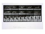 Greyhound Running, Plate 708 from 'Animal Locomotion', 1887 Premium Giclee Print by Eadweard Muybridge
