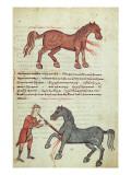 Ms Grec 2244 Fol.4 Operating on a Horse Giclee Print by  Greek School