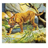Who's Who in the Zoo: the King's Pet Cat Giclee Print by G. W Backhouse
