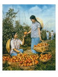 Chinese Food Production: Ripe Tomatoes, 1959 Reproduction procédé giclée par Chinese Photographer