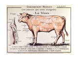 Veal: Diagram Depicting the Different Cuts of Meat Giclee Print by French School