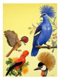Nature Wonderland: Birds with Crowns, 1970 Giclee Print by R. B. Davis