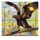 Who's Who at the Zoo: Fly-Away Goldie Giclee Print by McConnell