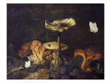 Still Life with Mushrooms and Butterflies Giclee Print by Schrieck