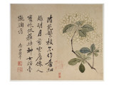 Hydrangeas, from an Album of Ten Leaves Giclee Print by  Yun Shouping