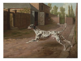 A Dalmation Running in a Stable Yard Giclee Print by Philip Reinagle