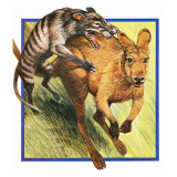 Tasmanian Wolf Attacking a Kangaroo Giclee Print by  English School
