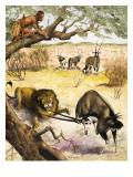 Animals Found in the Kalahari Desert, 1967 Giclee Print by Arthur Oxenham