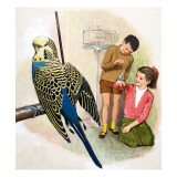 B Is for Budgerigars, Illustration from 'Treasure' Reproduction procédé giclée par Clive Uptton