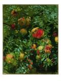 Pomegranates, Majorca, C.1908 Giclee Print by John Singer Sargent