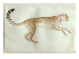 Bounding Cheetah with a Red Collar Giclee Print by Antonio Pisani Pisanello