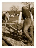 A German Farmer at Work Giclee Print by German Photographer