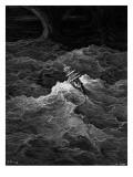 Ship in Stormy Sea Reproduction giclée Premium par Gustave Doré