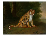 A Leopard in a Landscape Giclee Print by Jacques-Laurent Agasse