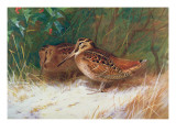 Woodcock in the Undergrowth Giclee Print by THORBURN