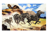 Lion Hunting Zebras Giclee Print by G. W Backhouse