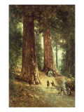 In the Redwoods, 1899 Giclee Print by Thomas Hill
