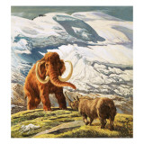 Mammoth Meets Rhinocerous Giclee Print by Tansley 