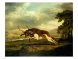 A Hound Attacking a Stag Giclée-Druck von George Stubbs