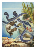 The Eel&#39;s Amazing Journey Giclee Print by G. W Backhouse