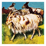 A Herd or Tribe of Goats Giclee Print by  English School