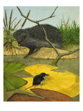 Water Shrew and Hedgehog, 1974 Giclee Print by Kenneth Lilly